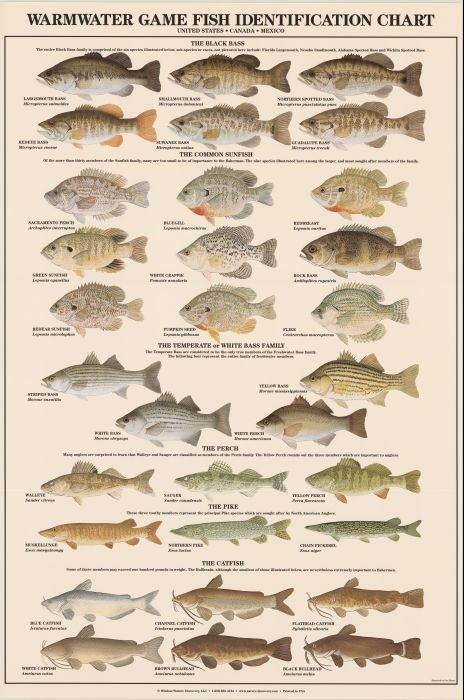 Warmwater Game Fish Identification Poster Duranglers Fly