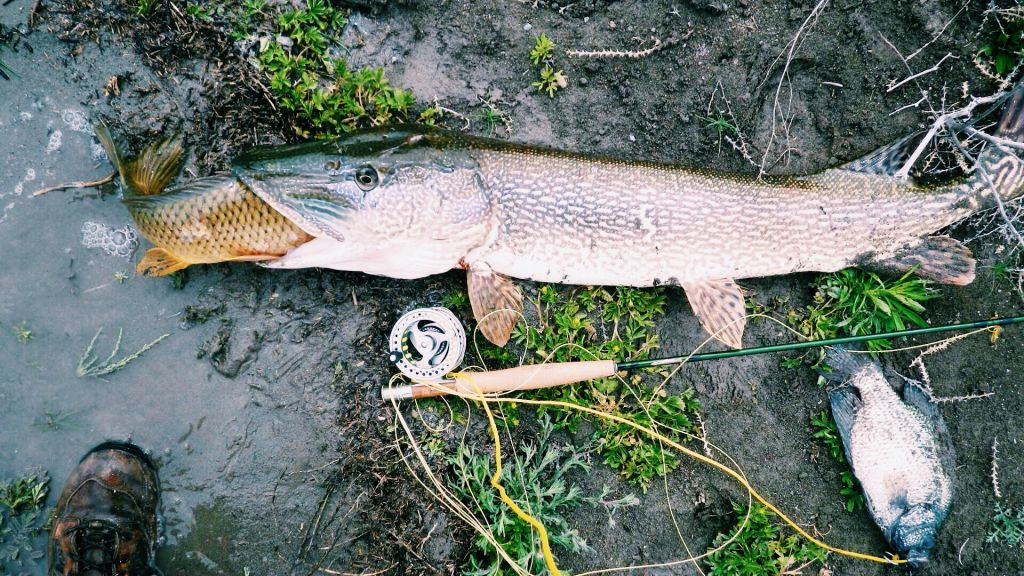 Carpiken-Pike-Fly-Fishing-Duranglers.jpg